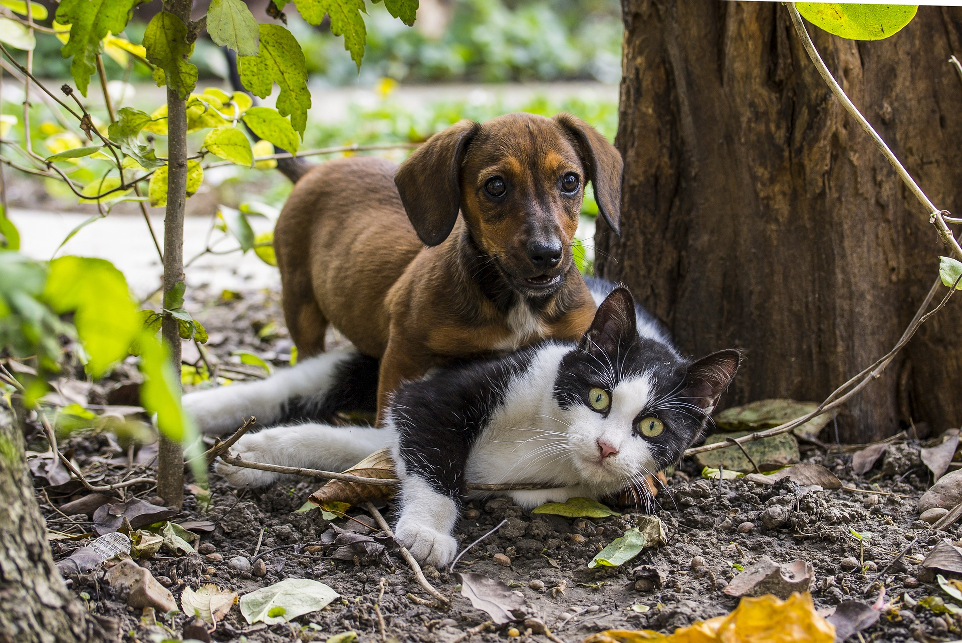 Picture of dog and cat in the woods