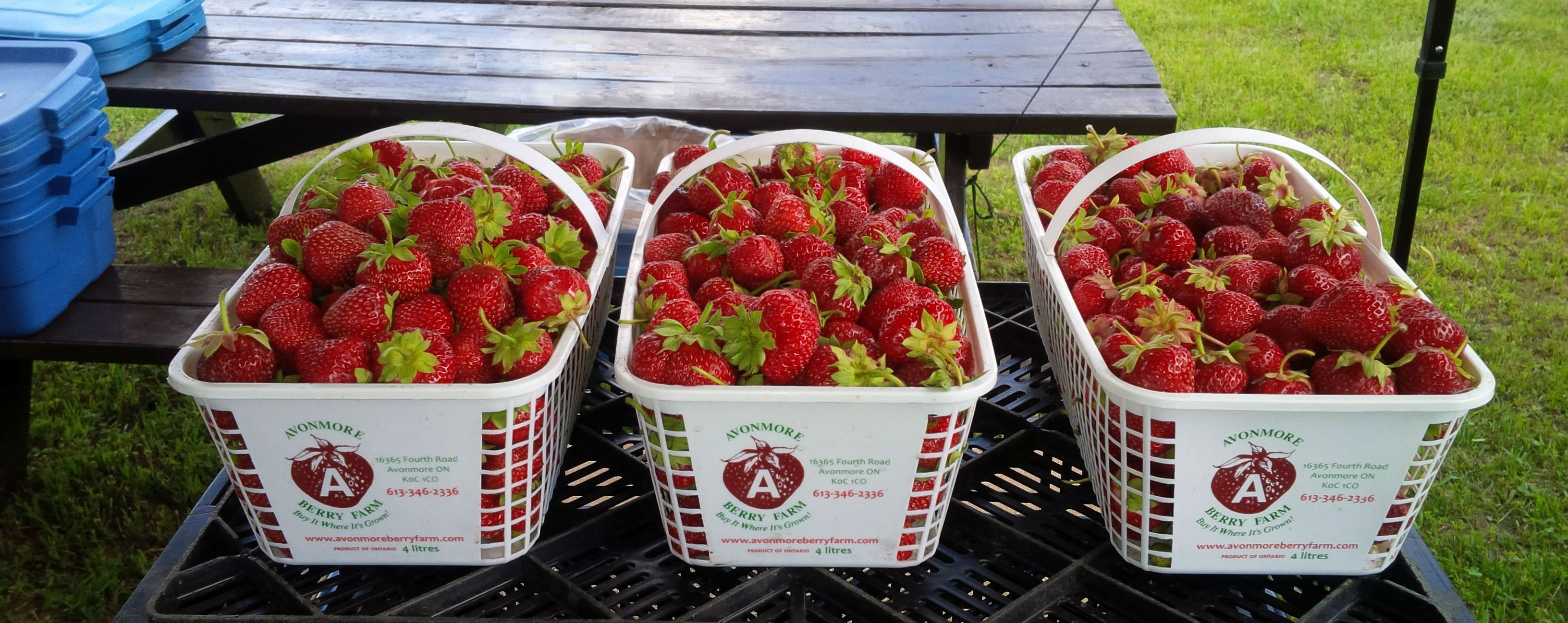 PIcture of Strawberries at Maxville Farmers Market